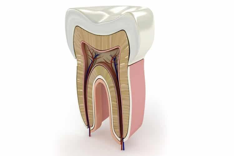 tratamiento-endodoncia-dental-meddicus